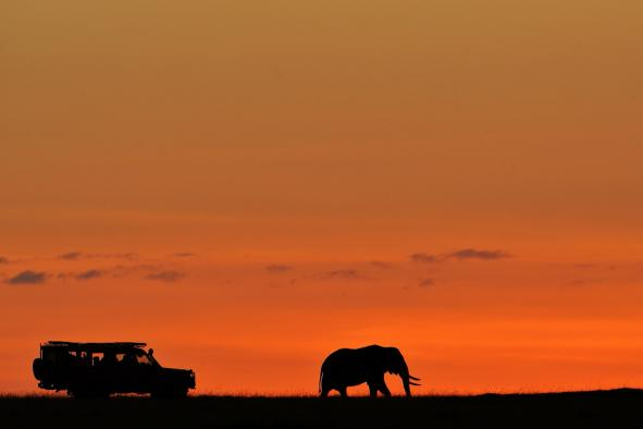safari-photo-afrique-24