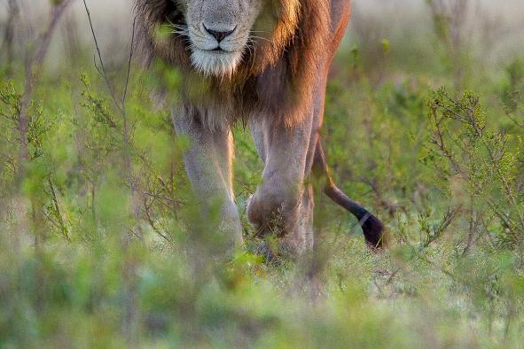 un-photographe-a-masai-mara-35