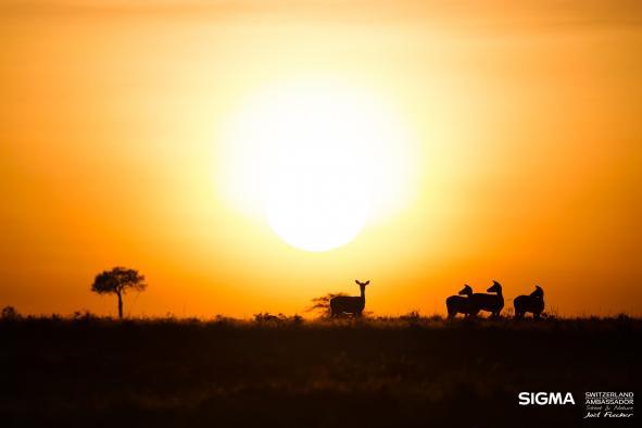 un-photographe-a-masai-mara-37