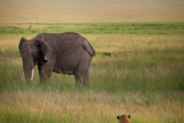 un-photographe-a-masai-mara-39