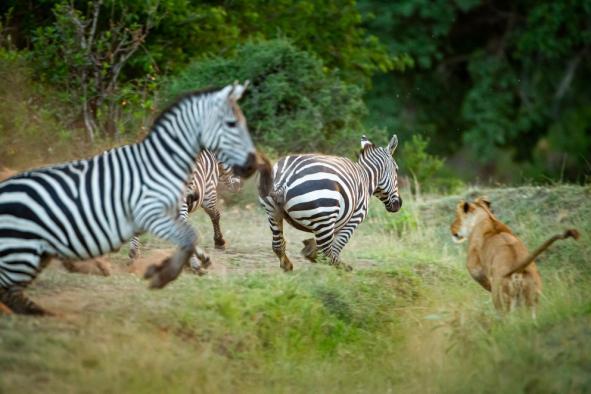 un-photographe-a-masai-mara-40