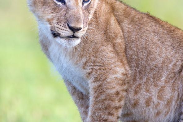 un-photographe-a-masai-mara-44