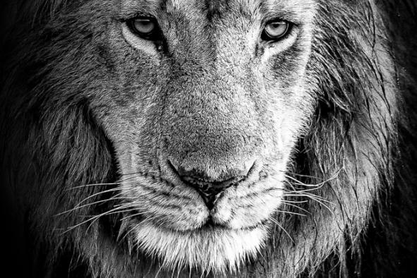 un-photographe-a-masai-mara-46