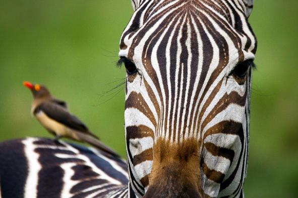 un-photographe-a-masai-mara-47