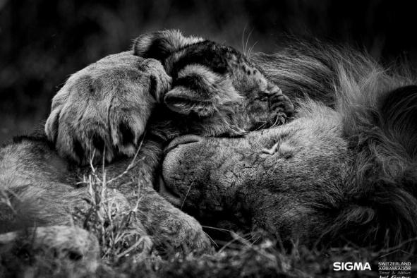 un-photographe-a-masai-mara-48