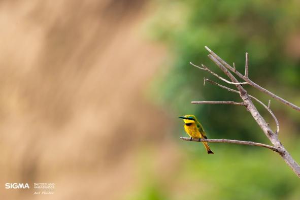 un-photographe-a-masai-mara-49