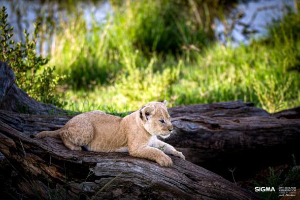 un-photographe-a-masai-mara-51