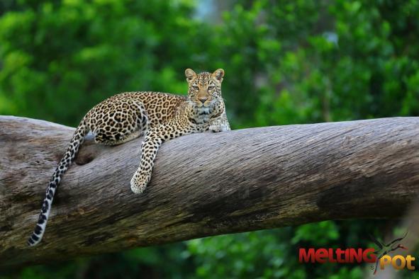 une-journee-de-safari-a-masai-mara-chez-melting-pot-safaris-53