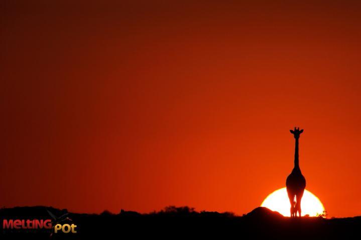 Déconfinement... Une aube nouvelle se lève de nouveau pour les safaris africains !