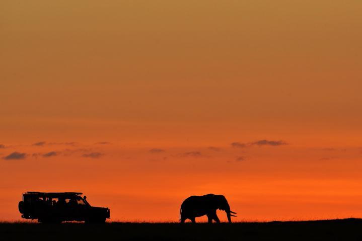 Safari photo Afrique