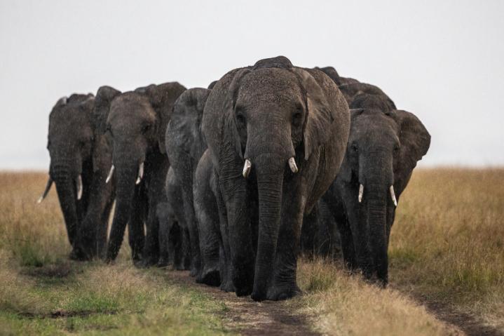 L'aventure africaine