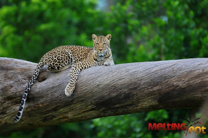 Une journée de safari à Masai-Mara chez Melting Pot Safaris