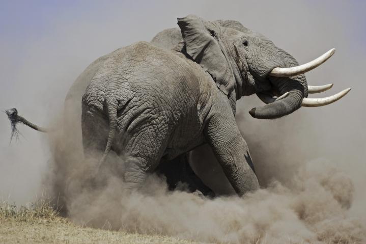 Melting Pot safaris  : la toute première image...