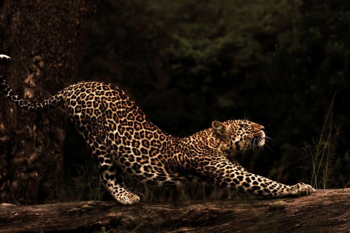 De la photographie naturaliste à la photographie artistique